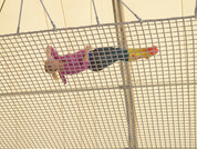Your Safety Net