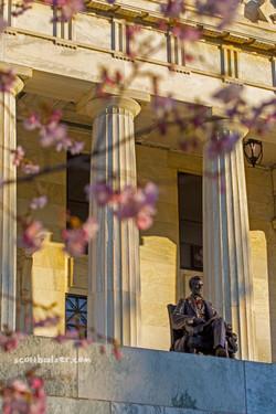 Abe Cherry Blossoms