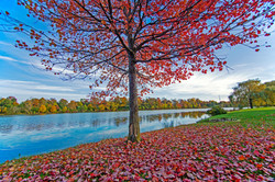 Red Leaves at Hoyt Lake