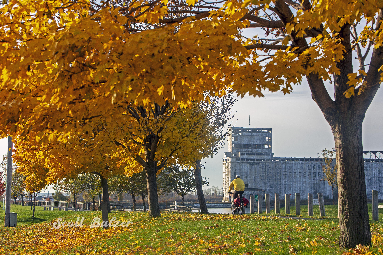 leaves_sb