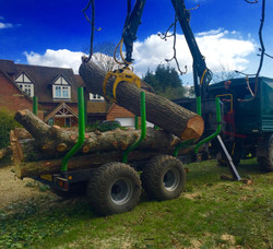 tree clearance, site clearance