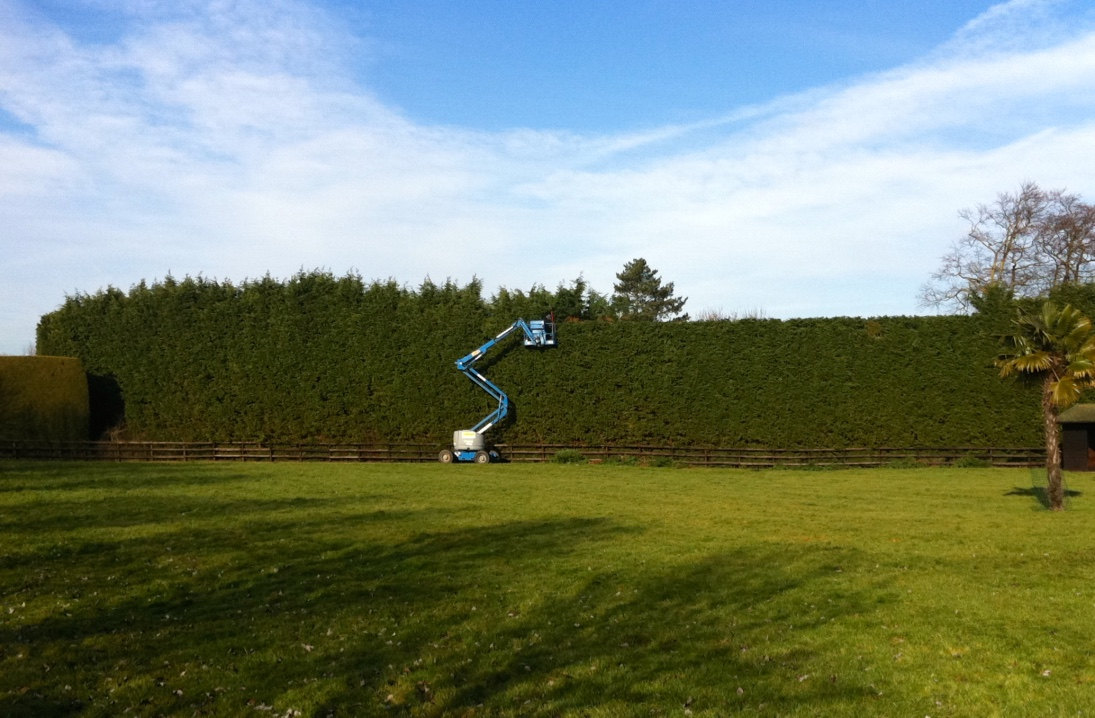 hedge reduction, hedge cutting