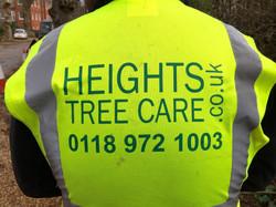 tree surgery, tree removal,