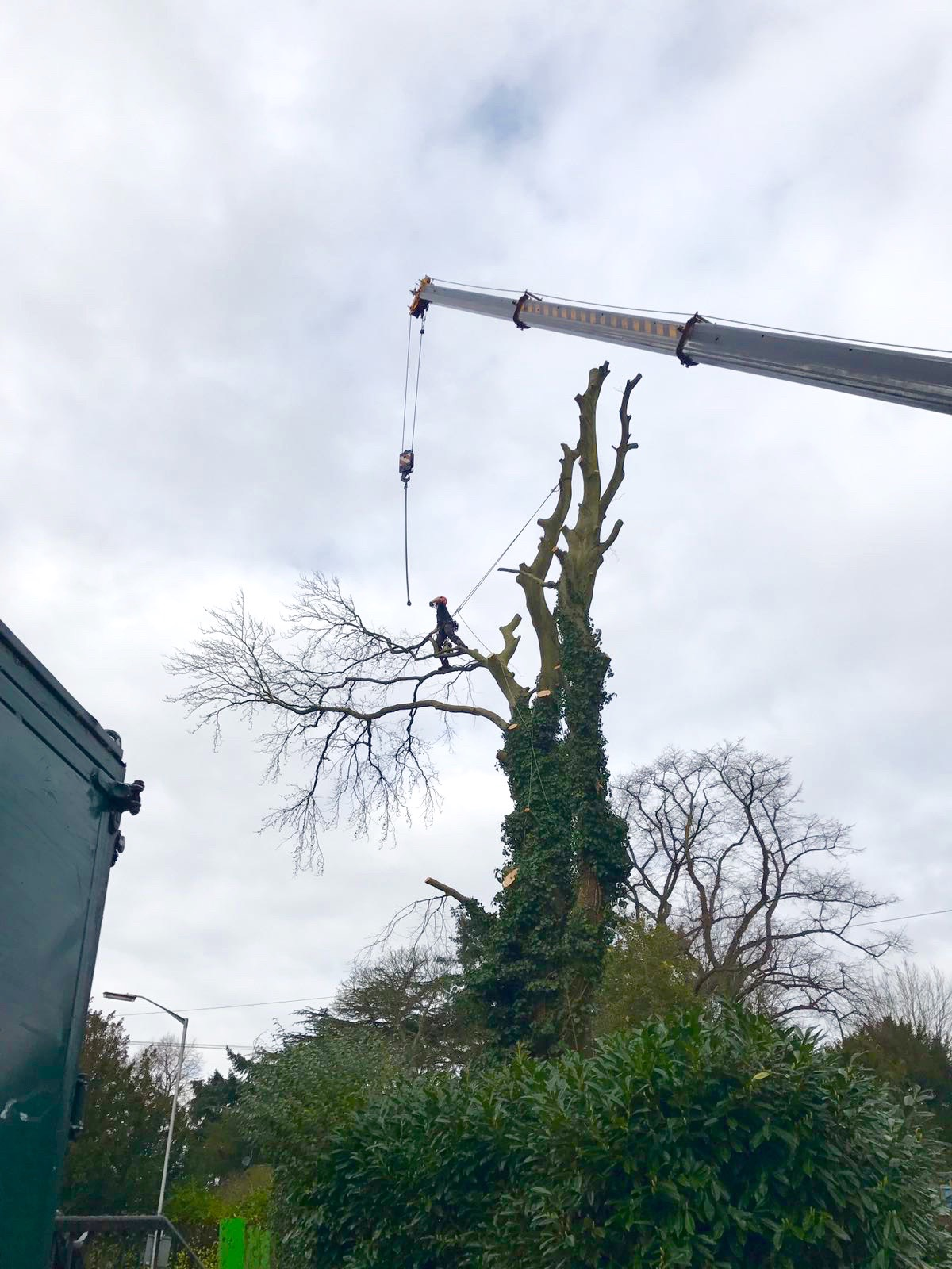 emergency tree work