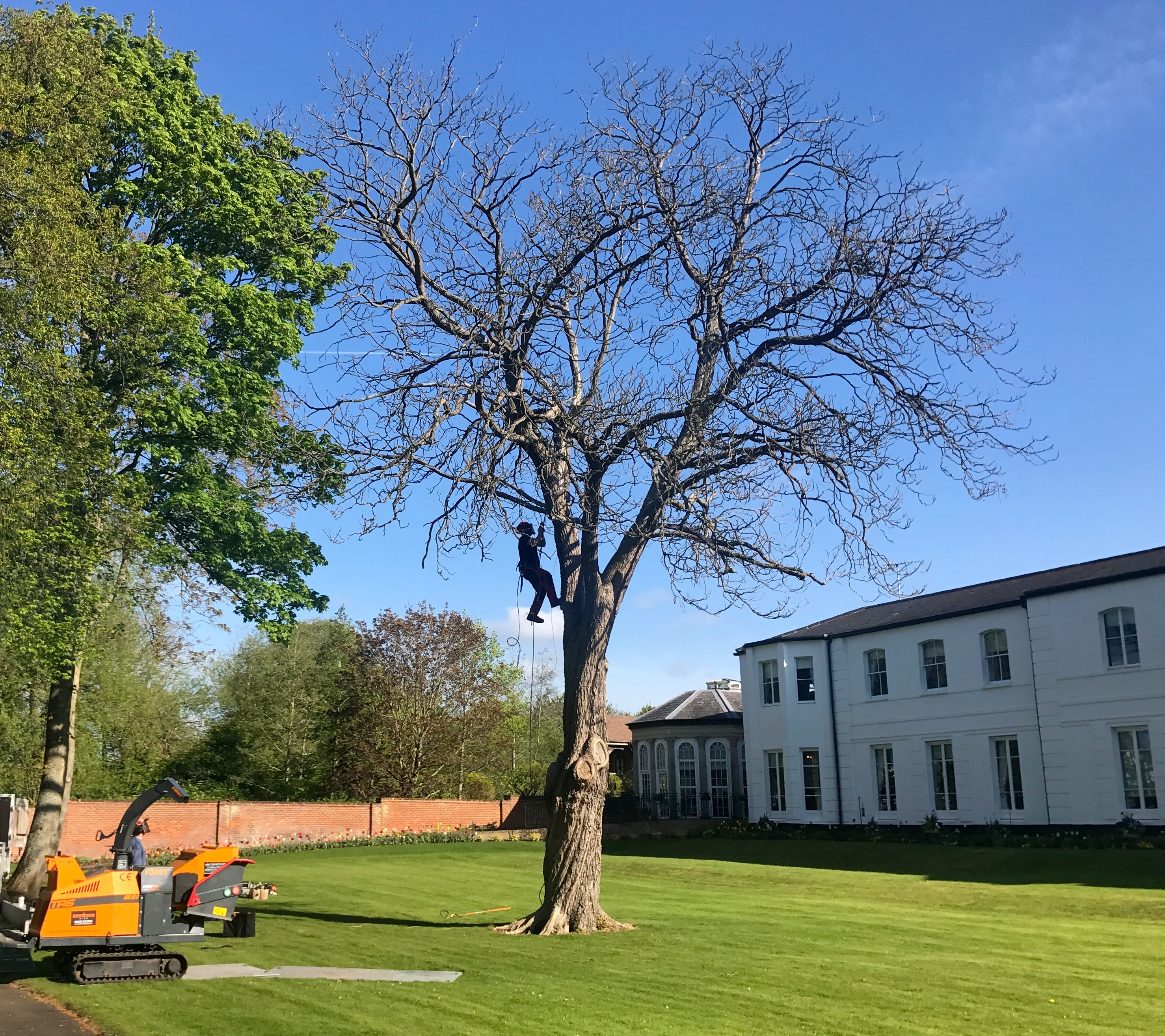 tree reduction, tree work