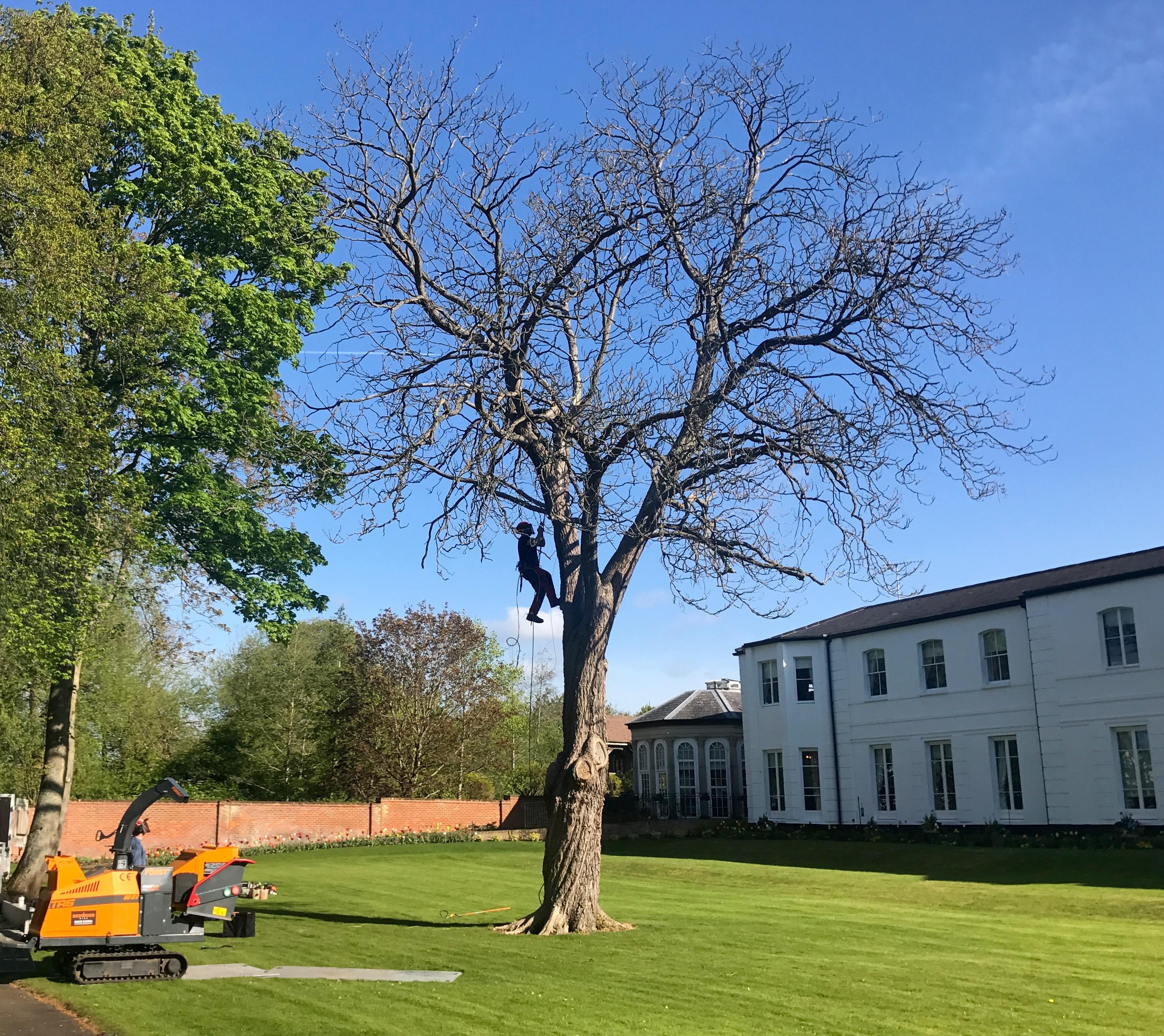 tree reduction, tree work