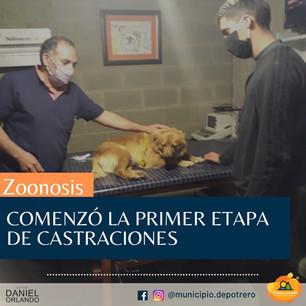 COMENZÓ LA PRIMER ETAPA DE LA CAMPAÑA DE CASTRACIONES