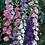 Thumbnail: Larkspur Crown Blended Mix Seeds