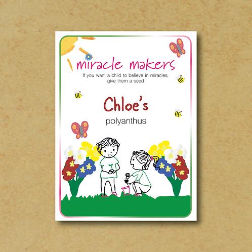 Miracle Maker Polyanthus Seeds
