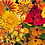 Thumbnail: Bright & Fiery Flower Seeds Mixed Pack