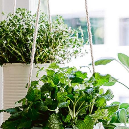 Creating an Indoor Herb Garden