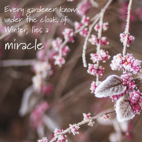 winter quote-01.png