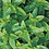 Thumbnail: 10 Packs Personalised Party Bag Mint Seeds