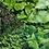 Thumbnail: Mixed Herbs Pack