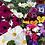 Thumbnail: Pretty Garden Flower Seeds Mixed Pack