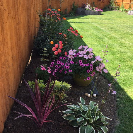 10 top tips for Gardening in July