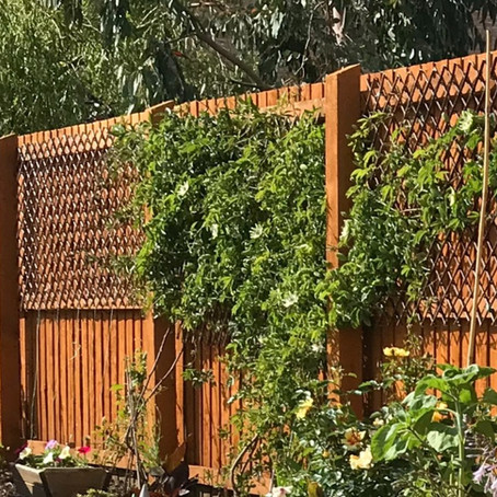 Tips for Gardening in a Small Garden