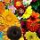 Thumbnail: Tall Flower Seeds Mixed Pack