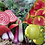 Thumbnail: Quirky, Colourful Vegetable Seeds Mixed Pack
