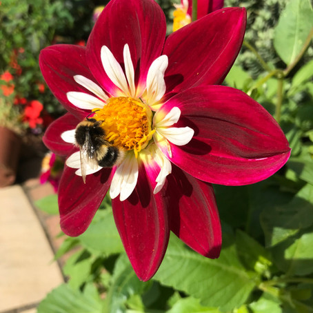 10 top tips for Gardening in August