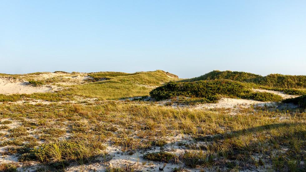 Horseneck Beach Dunes.jpg