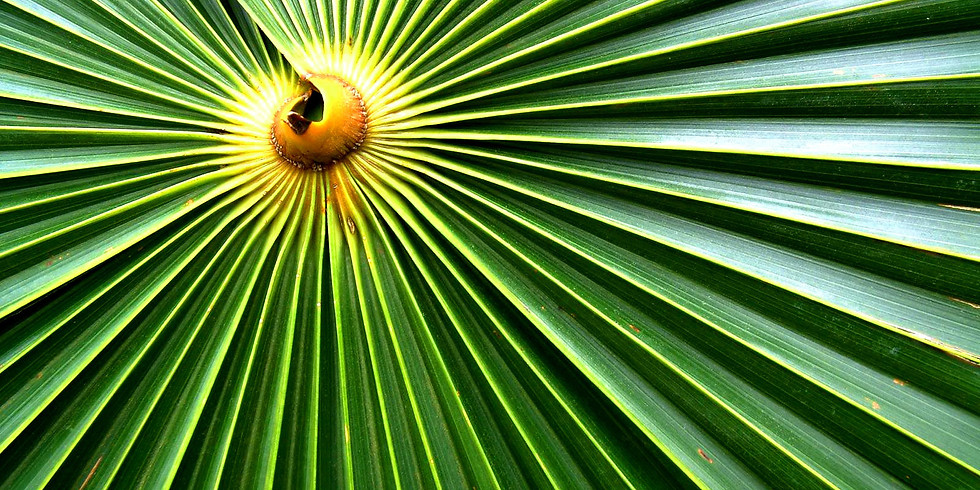 Palm Sunday Worship and Formation Events