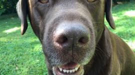 Zahnprobleme bei Hund und Katze
