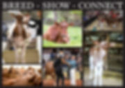 RWDCA-Breed-Show-Connect-Banner-NEW (1)