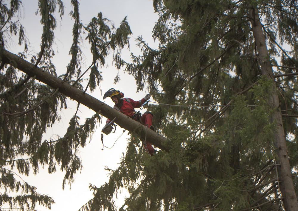 Удаление упавшего на дом дерева