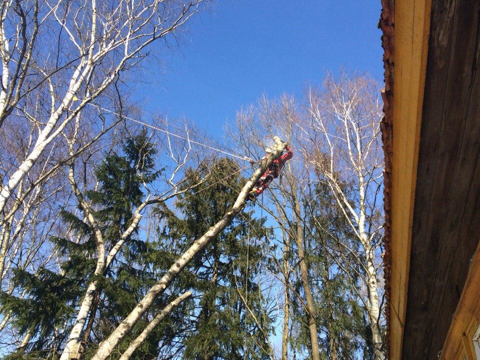 Удаление наклонного дерева