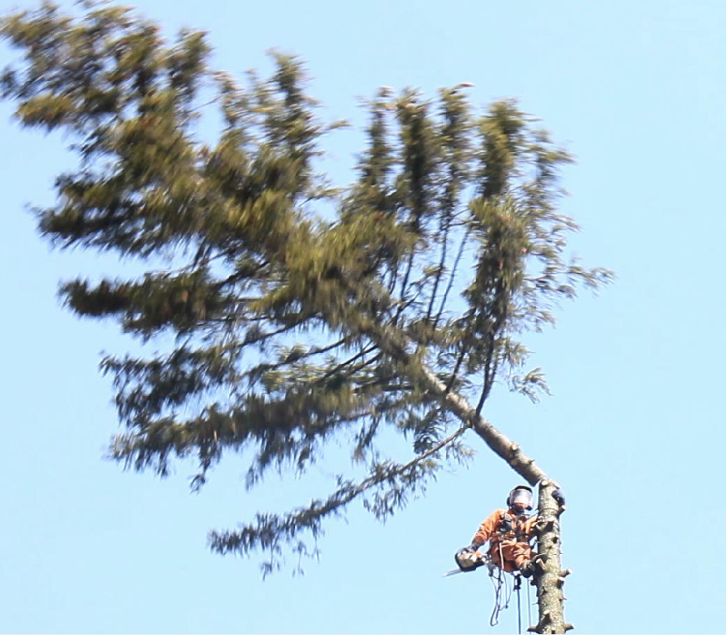Снятие кроны дерева