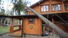 Что делать, если на ваш дом упало дерево?