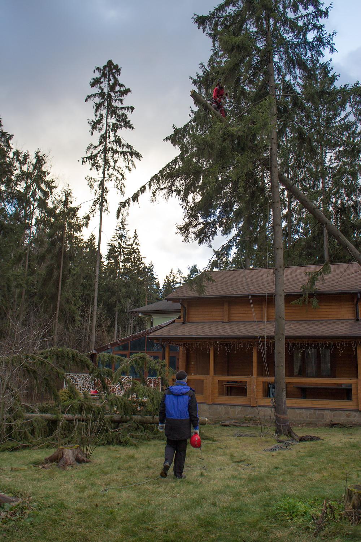Упавшее на дом дерево в надежных руках