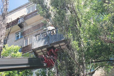 Удаление дерева в Москве