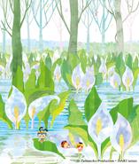水芭蕉 雪解に咲く白い妖精