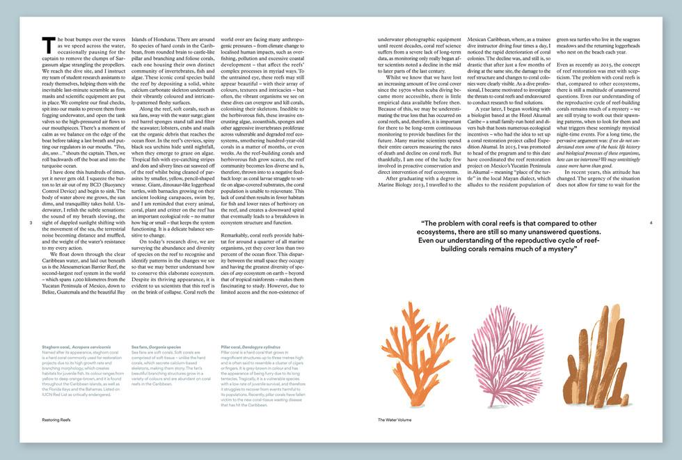 Robert Sae-Heng   Coral Reef Illustration