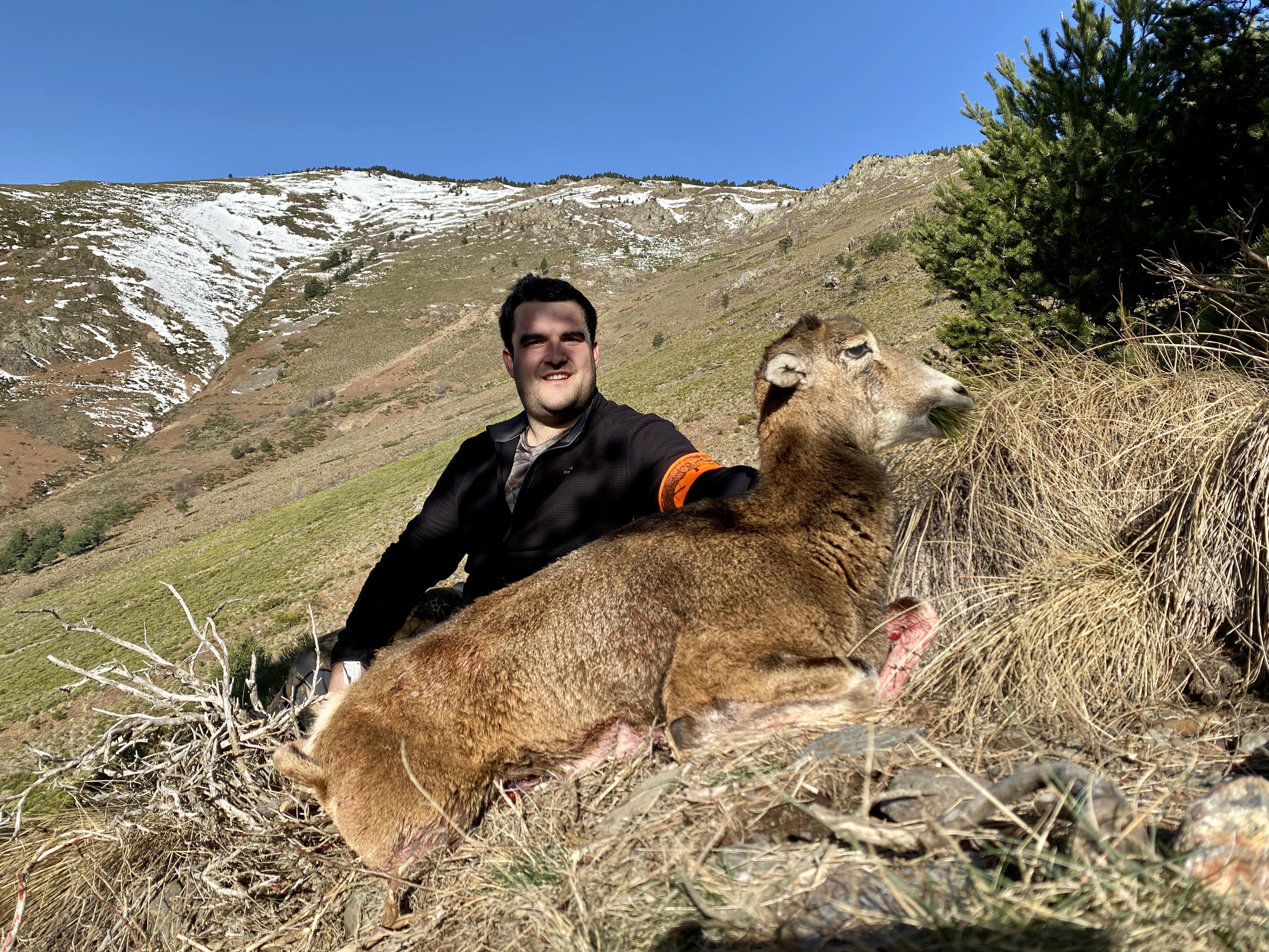 tir mouflon