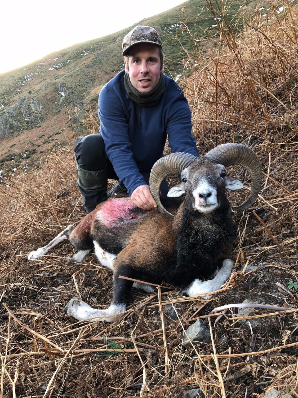 chasse mouflon Pyrénées