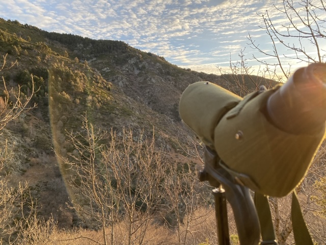 mouflon approche
