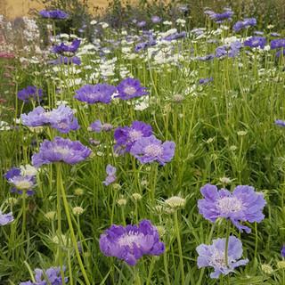 High Summer on the Flower Farm