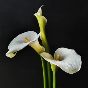 arum-lilies-black-shed-flowers.jpg