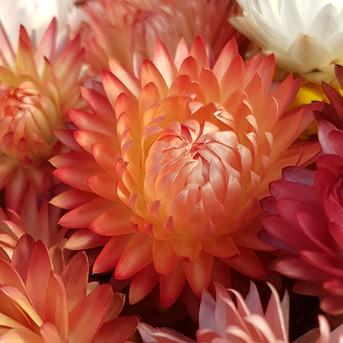 black-shed-dried-flowers-helichrysum.jpg