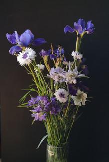 cornflowers-iris-may-black-shed-flowers.