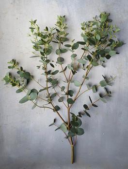 black-shed-eucalyptus-3.jpeg