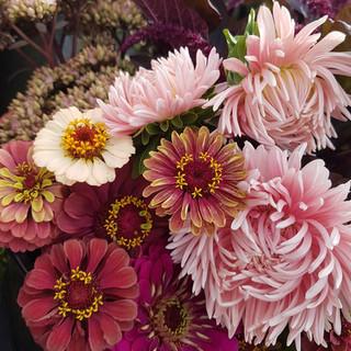 aster-zinnia-black-shed-flowers.jpg