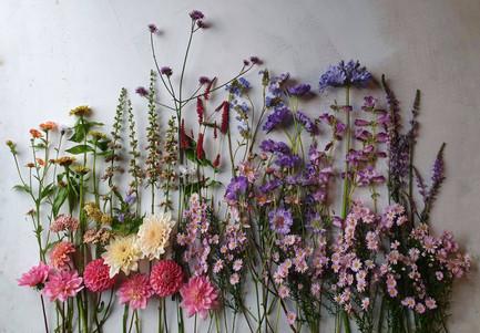 october-flowers-black-shed.2.jpg