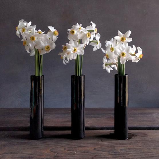 pheasant-eye-narcissus-black-shed-flower