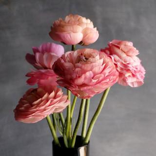 ranunculus-black-shed-flowers.jpg