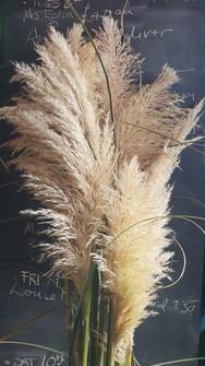pampas-black-shed-dried-flowers.jpg