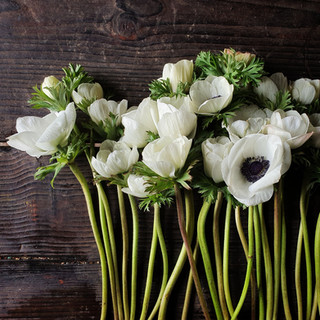 galilee-anemones-black-shed-flowers.jpg